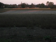 Hay ready at sunset