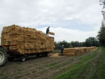 hay to make the counter lines